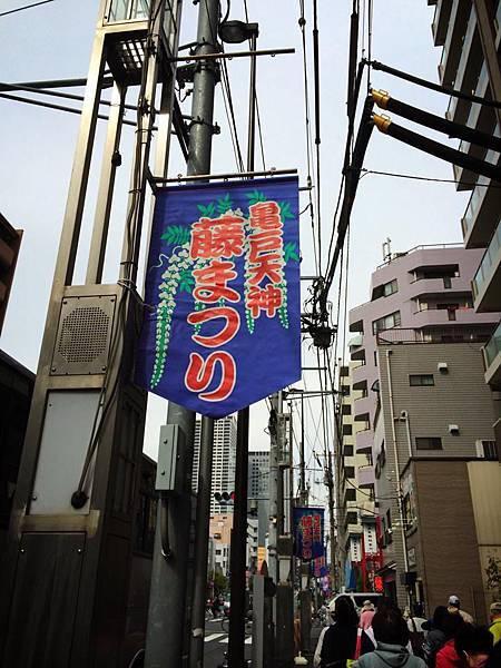d203龜戶天神社紫藤.jpg
