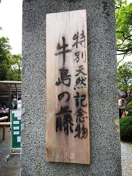d211牛島藤花園.jpg