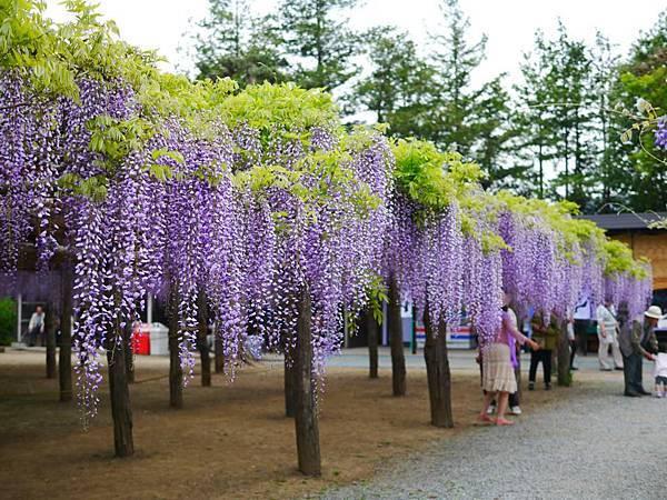 d212牛島藤花園.jpg