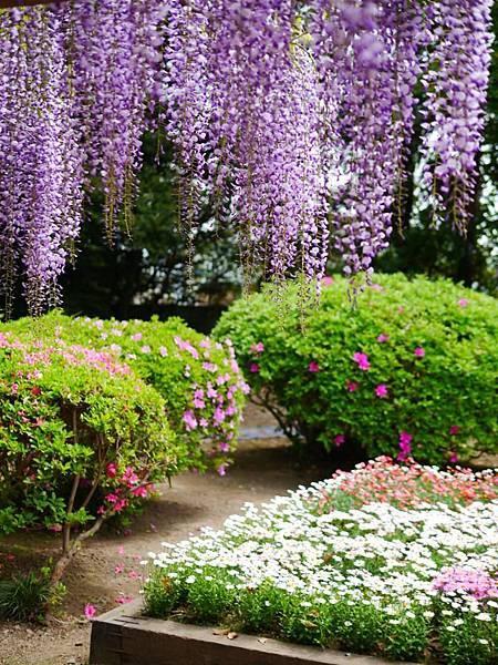 d216牛島藤花園.jpg