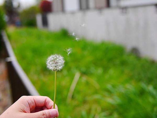 d218牛島藤花園.jpg