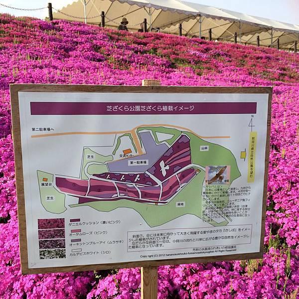 d222芝櫻公園.jpg