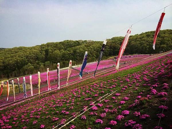 d227芝櫻公園.jpg