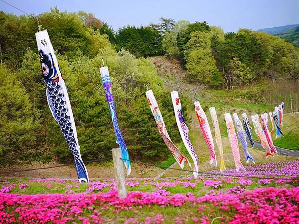 d228芝櫻公園.jpg