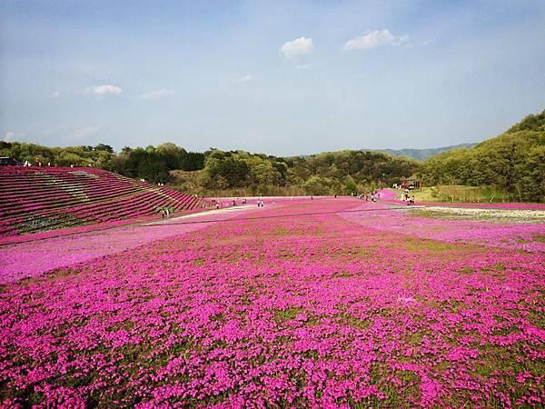 d230芝櫻公園.jpg