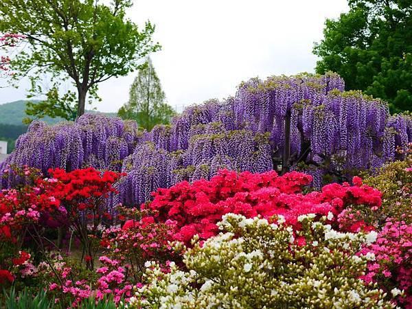 d329足利 Flower Park.jpg