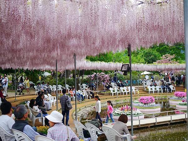 d330足利 Flower Park.jpg