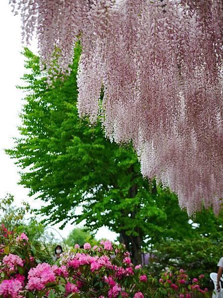 d333足利 Flower Park.jpg