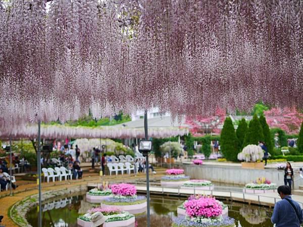 d335足利 Flower Park.jpg