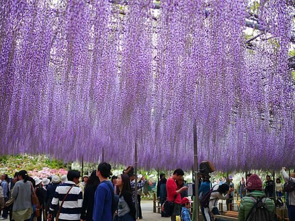 d336足利 Flower Park.jpg