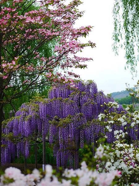 d338足利 Flower Park.jpg