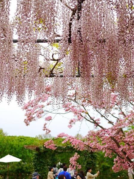 d341足利 Flower Park.jpg