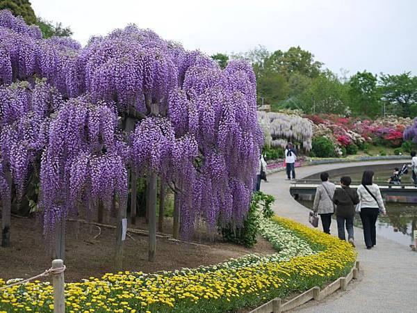 d343足利 Flower Park.jpg