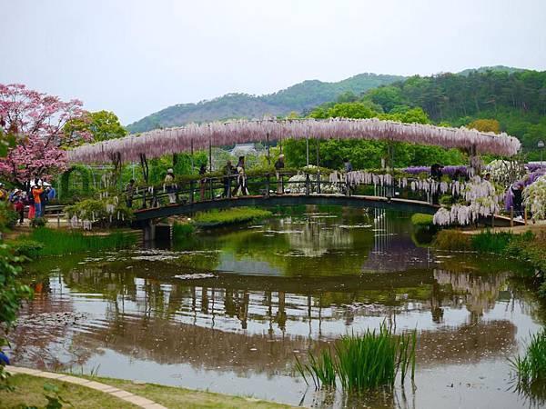 d344足利 Flower Park.jpg
