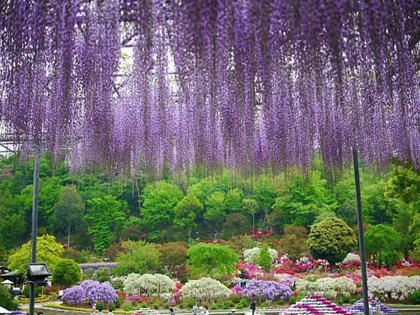 d346足利 Flower Park.jpg