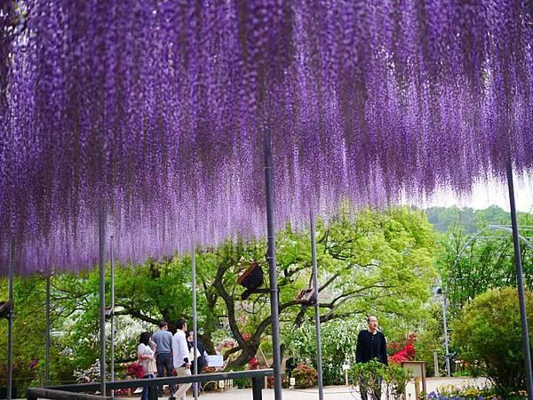 d347足利 Flower Park.jpg