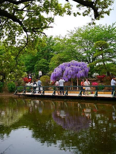 d348足利 Flower Park.jpg
