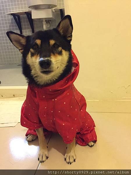 Day 4 屏東潮州_夢蝶寵物友善民宿_雨衣裝備