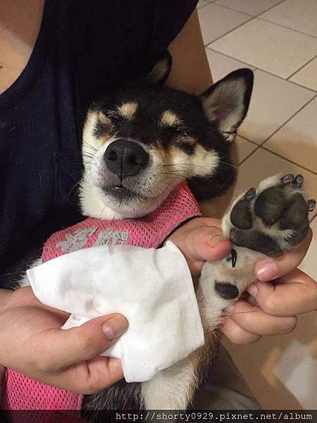 T-PET迪貝多寵物清潔萬用棉 6.jpg