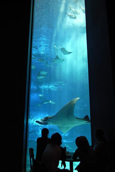 在魟魚們、鯊魚們旁午餐