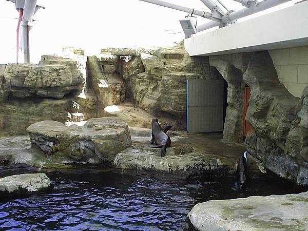 海獅餵食區
