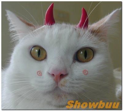 showbuu-04-m.jpg