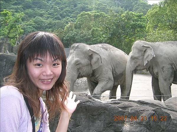 只剩兩隻大象