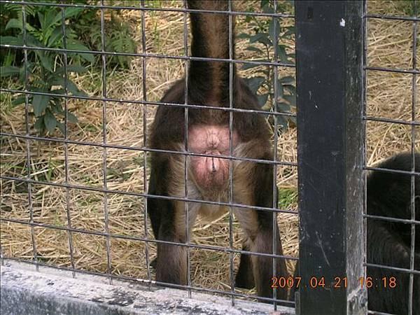 某隻猴子的屁屁~~不喜勿看~哈