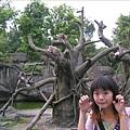 呵呵~~我裝猴子裝的很像吧!!!