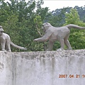 這兩隻也猴子也太逗趣了吧!