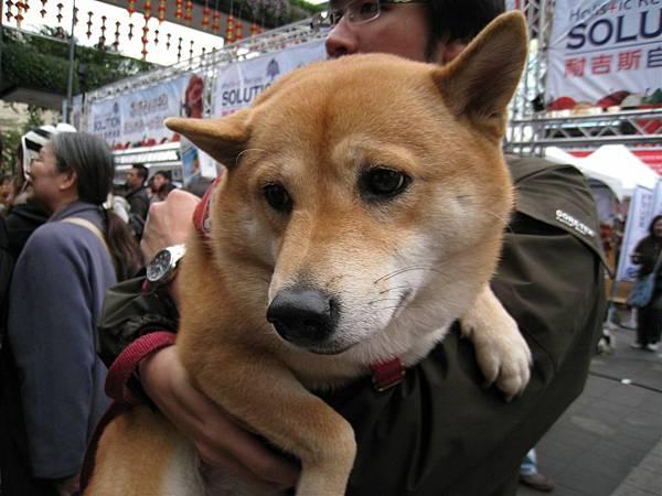 狗太多了~~辛苦的把拔只好把怕狗的女兒抱著....?! 可是你女兒是狗耶