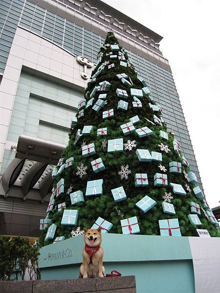 都來這邊了~ 扭蛋一定要跟聖誕樹拍一下的阿