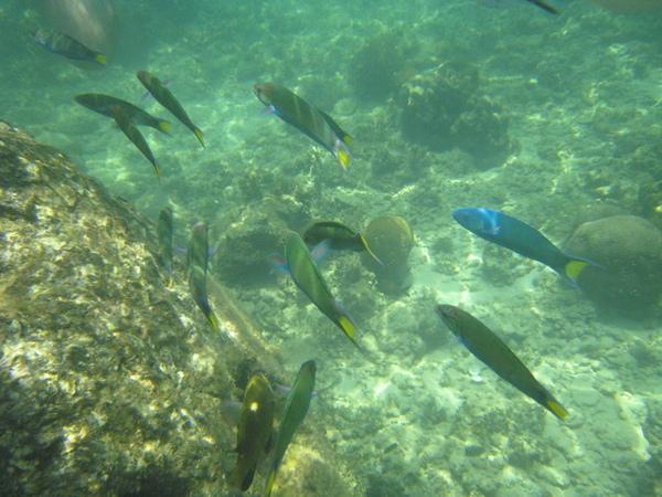 這裡的魚都很餓