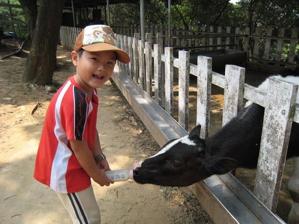 小牛喝ㄋㄟㄋㄟ