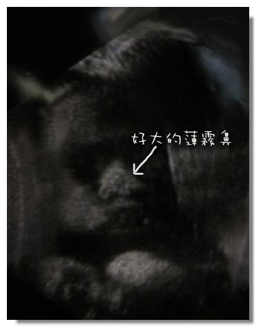 32W+2大鼻子.jpg