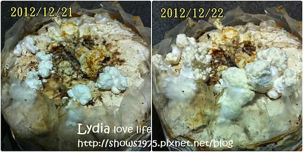 珊瑚菇1222
