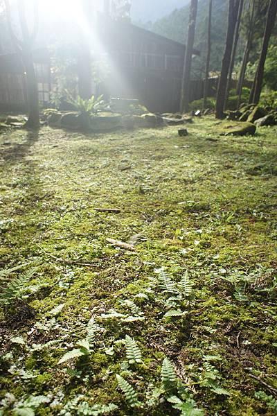 陽光灑在草地上