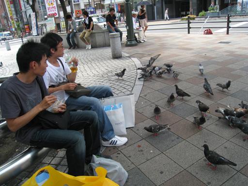 鴿子本來來一隻,後來來一群