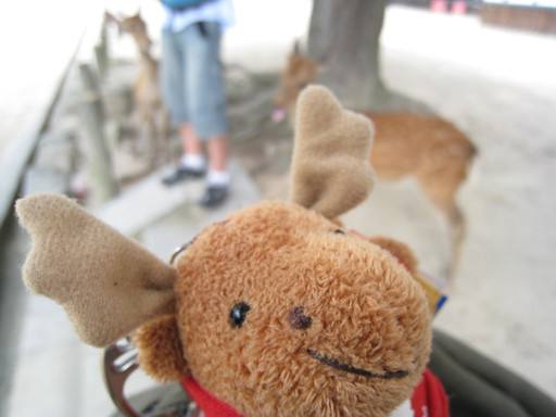 加拿大鹿和奈良鹿