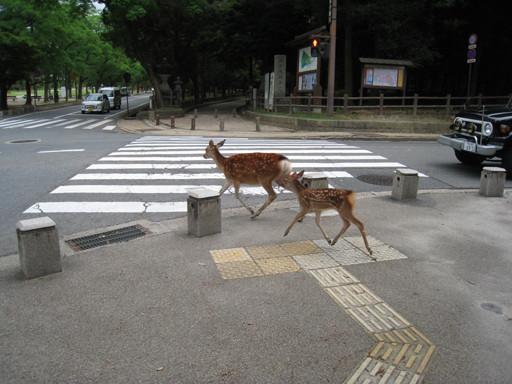 帶小鹿過馬路
