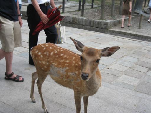 脫皮的小鹿