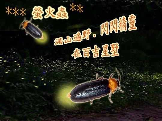 螢火蟲 複製.jpg