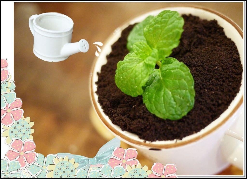 溫古咖啡 4911.jpg