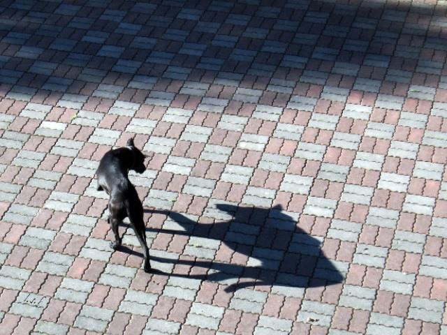 貓狗哲學(這樣是否會更好01)-2