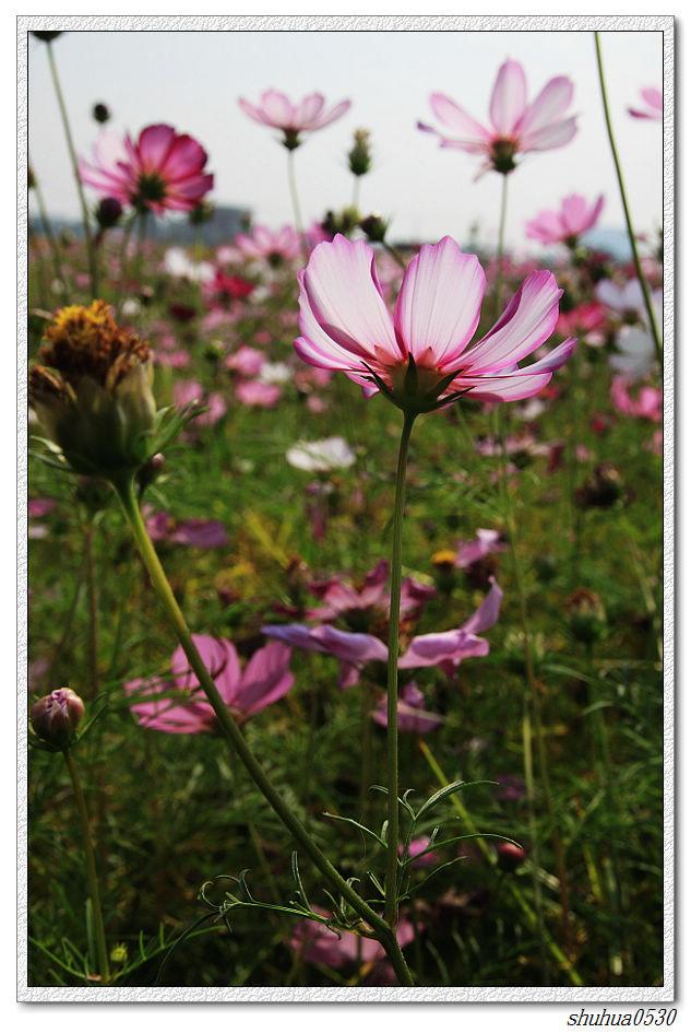 nEO_IMG_IMG_0102001.jpg