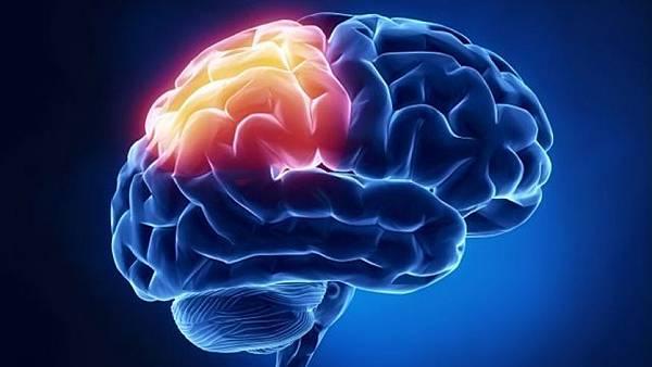 640_brain