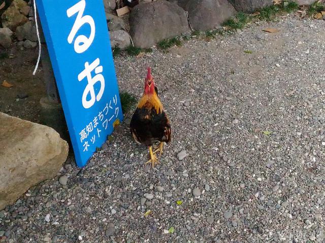 S_Yosako_0182