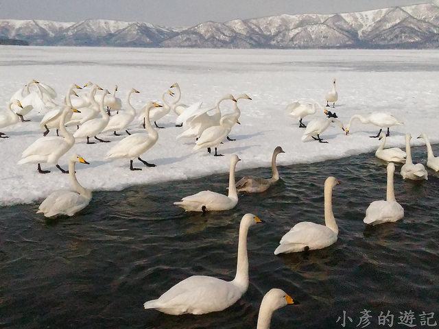 S_Snow_1098