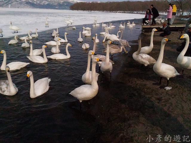 S_Snow_1112