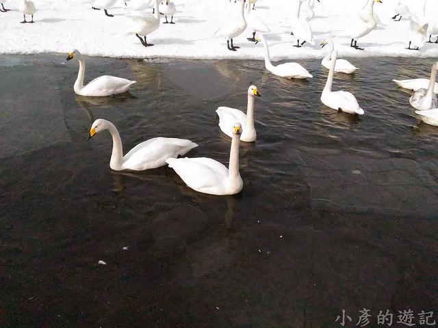 S_Snow_1116